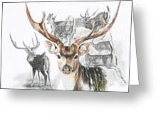 Axis Deer Greeting Card