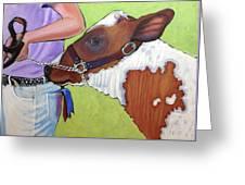 Ayrshire Show Heifer Greeting Card