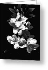 Azaela Blossom In Black And White Greeting Card