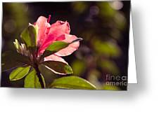 Azalea 2 Greeting Card