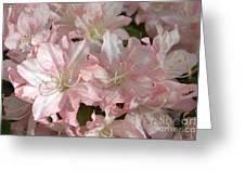 Azalea 5831 Greeting Card