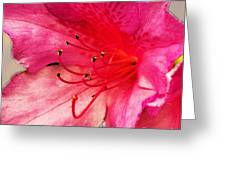 Azalea Blossom Greeting Card by Jinx Farmer