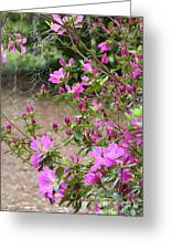 Azalea Branches And Spanish Moss Greeting Card