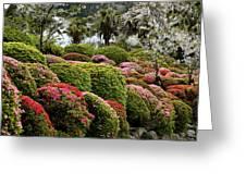 Azalea Bush Garden Greeting Card