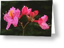Azalea D Greeting Card