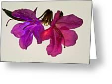Azalea Double Greeting Card