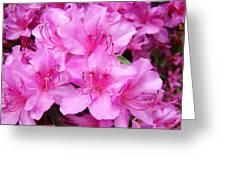 Azalea Floral Garden Fine Art Photography Baslee Troutman Greeting Card