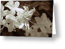 Azalea Flowers In Sepia Brown Greeting Card