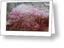 Azalea Framed By Roof Greeting Card