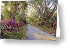 Azalea Lane By H H Photography Of Florida Greeting Card