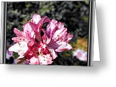 Azalea Greeting Card