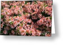 Azalea Wall Greeting Card