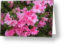 Azalea Watercolor  Greeting Card by Fred Jinkins
