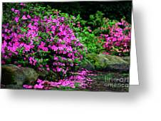 Azalea Waterfall At The Azalea Festival Greeting Card