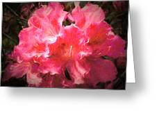 Azaleas 10 Greeting Card