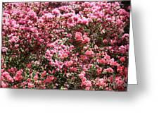 Azaleas Aplenty Greeting Card