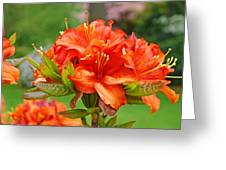 Azaleas Art Home Decor 14 Orange Azalea Flowers Art Prints Greeting Cards Greeting Card