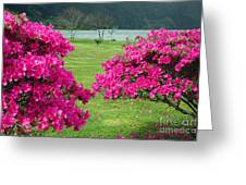 Azaleas At The Azores Greeting Card
