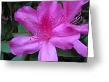 Azaleas IIi Greeting Card
