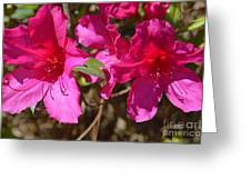 Azaleas In Magenta Greeting Card