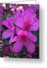 Azaleas In Springtime Greeting Card