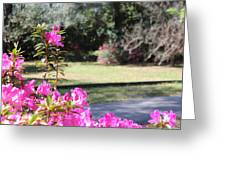 Azaleas In The Close 10 Greeting Card