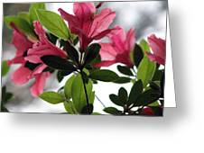 Azaleas Iv Greeting Card
