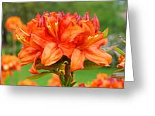 Azaleas Orange Red Azalea Flowers 11 Botanical Giclee Art Baslee Troutman Greeting Card