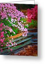 Azaleas Over The Fence Greeting Card
