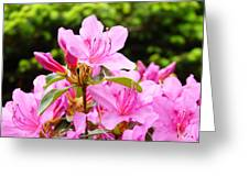 Azaleas Pink Azalea Flowers Artwork 12 Landscape Art Prints Greeting Card