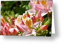 Azaleas Pink Orange Yellow Azalea Flowers 6 Summer Flowers Art Prints Baslee Troutman Greeting Card