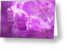 Azaleas Greeting Card
