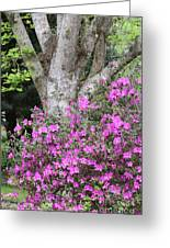 Azaleas With Tree Greeting Card