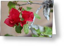 Aztec Bougainvillea  Greeting Card