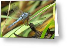 Azure Dragonfly 1 Greeting Card