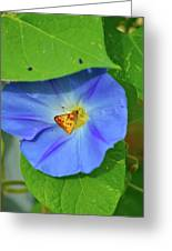 Azure Morning Glory Greeting Card