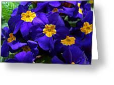 Azure Primrose Greeting Card