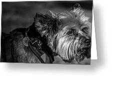 B And W Dog Greeting Card
