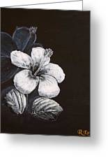 B And W Hibiscus Greeting Card
