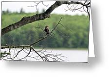 Kejimkujik National Park - Bird Greeting Card