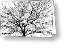 B/w Tree #1 Greeting Card