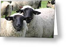 Baa Friends Greeting Card