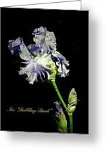Babbling Brook Iris  Greeting Card