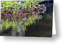 Babcock Wilderness Ranch - Alligator Den Greeting Card