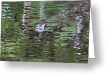 Babcock Wilderness Ranch - Alligator Lake - Heads Up Greeting Card