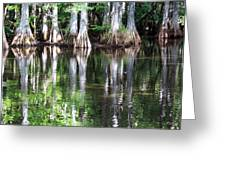 Babcock Wilderness Ranch - Alligator Lake Reflections Greeting Card