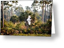 Babcock Wilderness Ranch - Gliding Great Egret Greeting Card