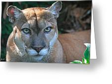 Babcock Wilderness Ranch - Oceola The Panther Pleasantly Peering Greeting Card