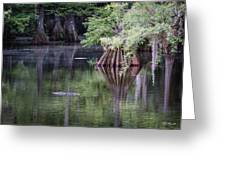 Babcock Wilderness Ranch - Peaceful Alligator Lake Greeting Card