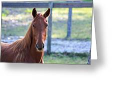 Babcock Wilderness Ranch - Red Horse Portait Greeting Card